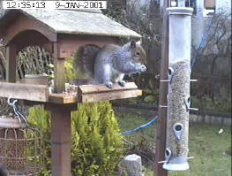 Garden Bird Table Camera